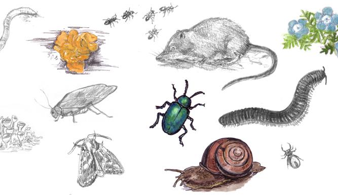 Картинки природы для ноутбука